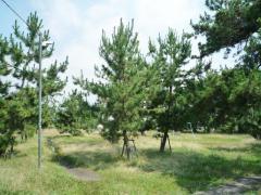 曽根松原公園
