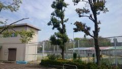 所沢北野公園市民プール