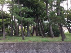 松が丘一号緑地
