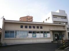 愛媛動物病院