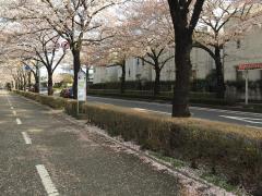 「おいせ橋」バス停留所