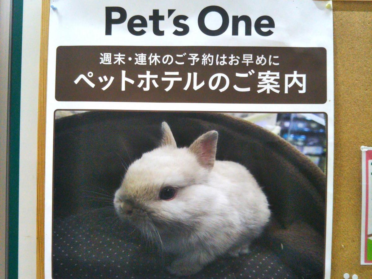 ペット 名古屋 インター