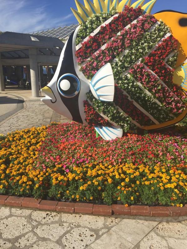沖縄美ら海水族館です