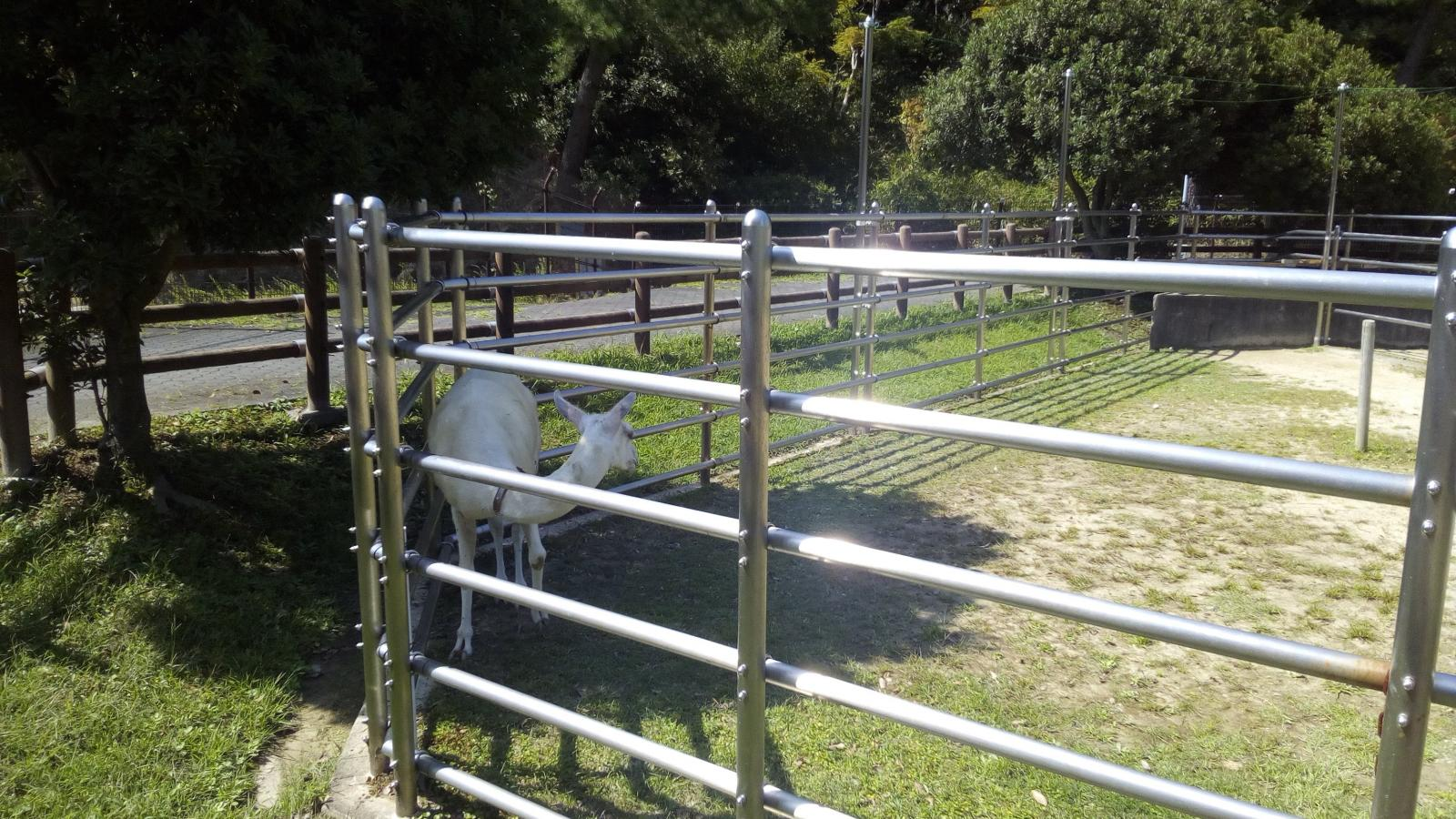 東公園動物園6