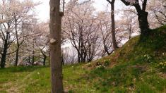 城山公園(高水寺城跡)