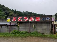 観光農園柴久園