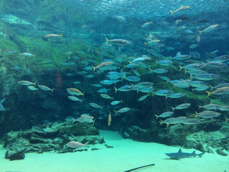西海国立公園九十九島水族館海きらら