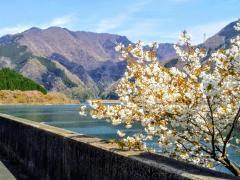 永源寺ダム湖