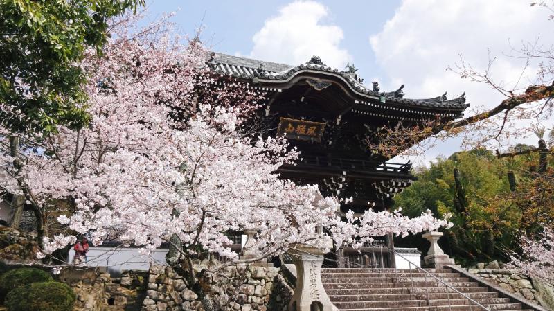 粉河寺中門と桜