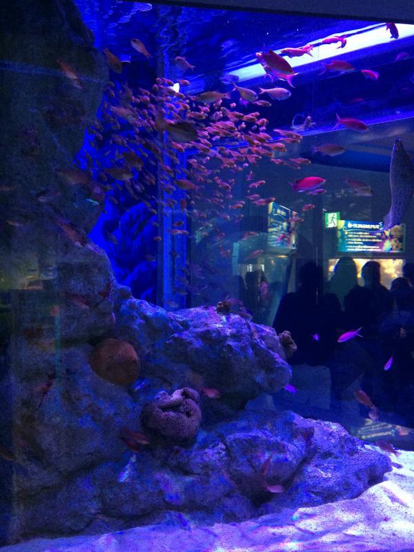 水槽内の魚