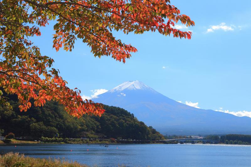 河口湖紅葉と富士山