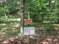 大和田緑地公園