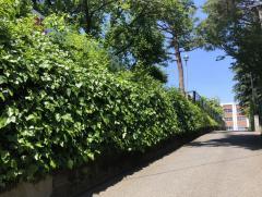 東京女子学院高校