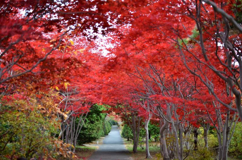樹芸センターの紅葉