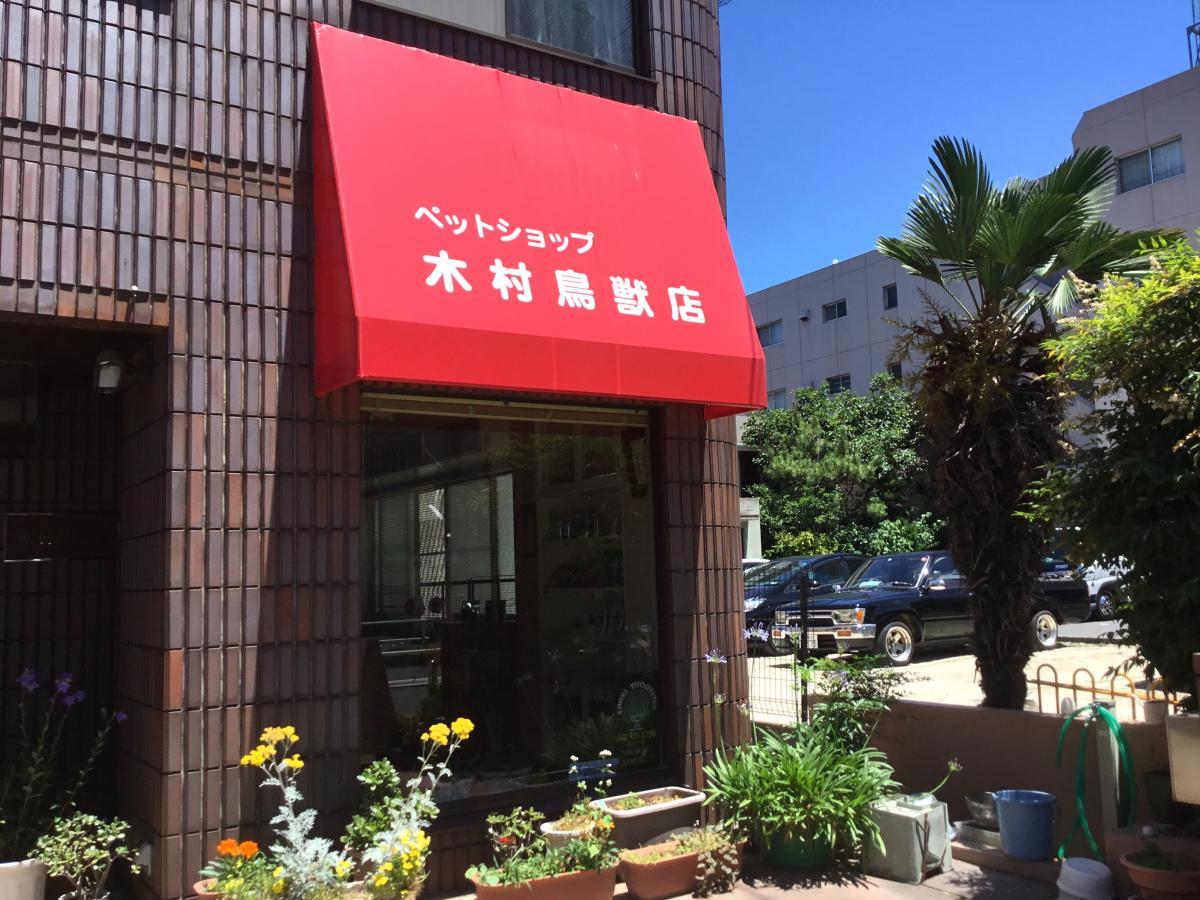 木村鳥獣店