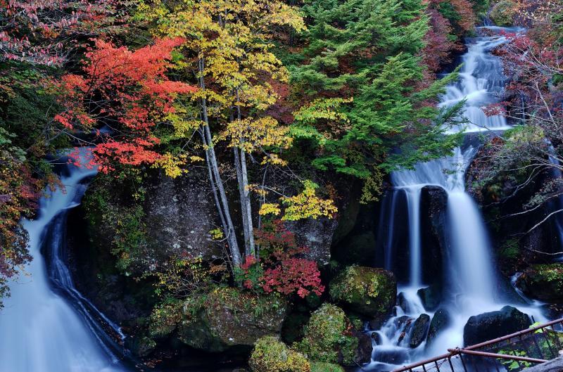 水竜と秋模様